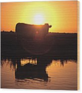 Cow At Sundown Wood Print by Picture Partners and Photo Researchers