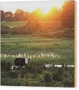 Cow At Sunset Wood Print