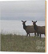 Cow Elk Pair On Beach Wood Print