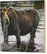 Cow Moose Wood Print