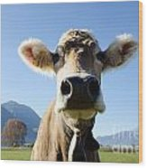 Cow With A Bell Wood Print