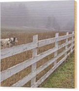 Cows And Fog Wood Print