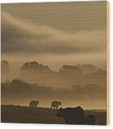 Cows Are Silhouetted In A Field Wood Print