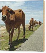 Cows At The Sea Wood Print