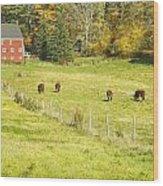 Cows Grazing On Grass In Farm Field Fall Maine Wood Print