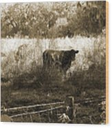 Cows In Pasture Wood Print