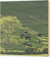 Cows On Hillside Summer In Maine Wood Print