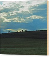 Cows On The Hill Wood Print