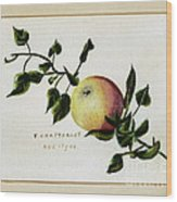 Coxs Apple 1922 Wood Print