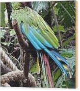 Coy Parrot Wood Print