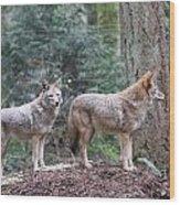 Coyote - 0011 Wood Print