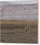 Coyote Badlands National Park Wood Print