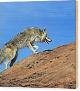 Coyote Climbs Mountain Wood Print