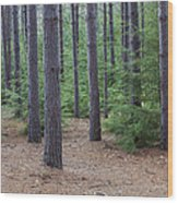 Cozy Conifer Forest Wood Print
