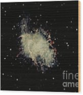 Crab Nebula Wood Print by Hale Observatories