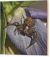 Crab Spider In A Violet Wood Print