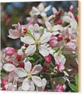 Crabapple Tree Flower Wood Print