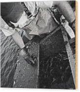 Crabbing On The Potomac Wood Print