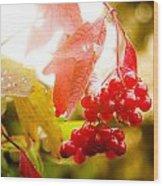 Cranberry Bliss Wood Print