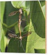 Crane Flies Mating Wood Print