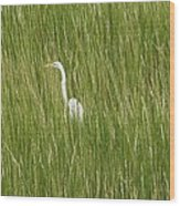 Crane In The Tall Grass On Assateague Island Maryland Wood Print