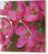 Crapapple Blossoms Wood Print