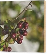 Crape Myrtle Fruit Wood Print