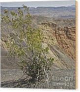 Crater Bloom Wood Print