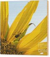 Crawling Along The Sunflower Wood Print