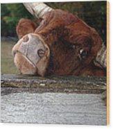 Crazed Look In The Bulls Eye Wood Print