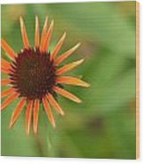 Crazy Coneflower Patch Wood Print by Maria Suhr