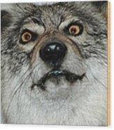 Crazy Like A Fox Wood Print