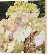 Cream Pink Hydrangea Flowers Art Prints Floral Wood Print