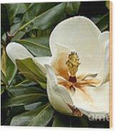 Creamy Magnolia Wood Print
