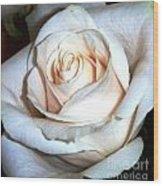 Creamy Rose IIi Wood Print