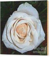 Creamy Rose Iv Wood Print