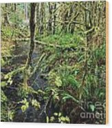 Creek In The Rain Forest Wood Print