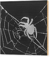 Creepy Spider Wood Print