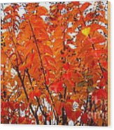 Crepe Myrtle Leaves In Autumn Wood Print