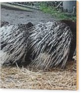 Crested Porcupine - 0002 Wood Print