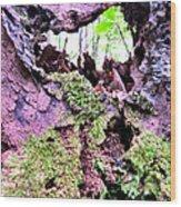 Crevis Wood Print
