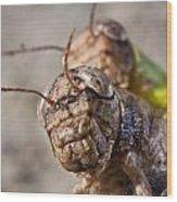 Crickets Mating Wood Print