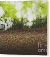 Crimson Clover Wood Print