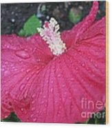 Crimson  Hibiscus Wood Print