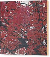 Crimson Leaves Wood Print