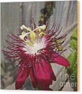 Crimson Passion Flower Wood Print