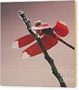Crimson Wings At Dusk Wood Print