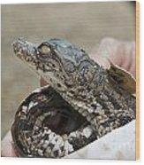 Crocodile And Alligator Breeding Farm  Wood Print