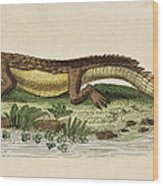 Crocodile Wood Print