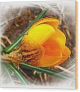 Crocus Gold Two Wood Print